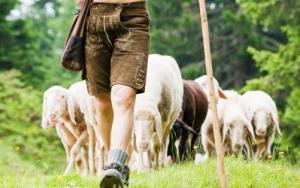 thief and shepherd